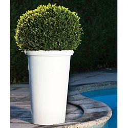 Camelia Indoor-Outdoor Planter