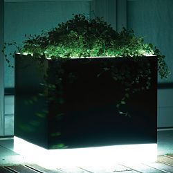 Cubotti Light Indoor-Outdoor Lighted Planter